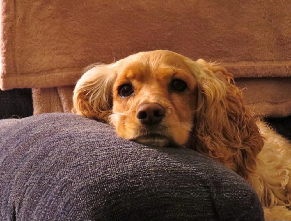 best dog breeds for mental health