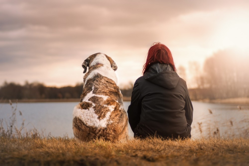can dogs help with a mental illness?